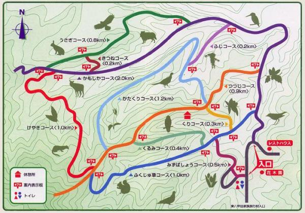 kazoku_forest_map.jpg