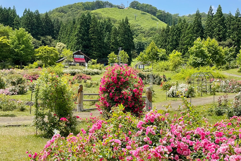 Eastern Hakkoda Rose Country